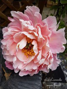 Flowers peonies garden inspiration 35 new ideas - Florales - Blumen arrangements Peony Flower, Flower Art, Flower Beds, Cactus Flower, Art Floral, Sugar Flowers, Beautiful Flowers, Clay Flowers, Exotic Flowers
