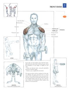 Muscle Building Tips. Gain More Mass With These Weight Training Tips! It can be fun to lift weights if you do it safely and correctly. You can enjoy yourself and see the progress of an effective workout routine. Sport Fitness, Fitness Workouts, Mens Fitness, At Home Workouts, Fitness Tips, Fitness Motivation, Health Fitness, Weight Training, Weight Lifting