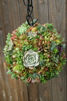 Succulent Ball: I have the wire baskets...now I need to gather up a bunch of cuttings to make this!