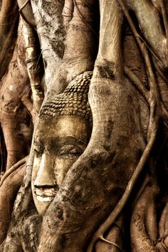 Peaceful Buddha has been here a very long time.roots of a banyon tree engulf it. Mystery Photo Contest: Where in the World? Bangkok Hotel, Bangkok Travel, Thailand Travel, Thailand Art, Mystery Photos, Places To Travel, Places To Visit, Collor, All Nature