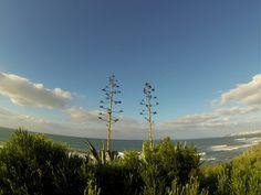 Seaside flora (Portugal)