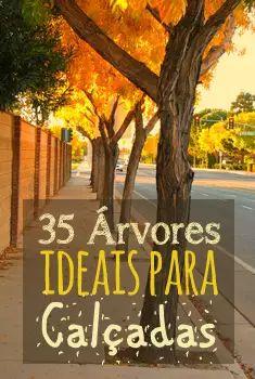 35 Árvores ideais para calçadas