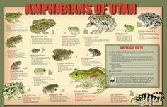 http://garryrogers.com/2015/03/16/citizen-science-helps-find-utah-toads-frogs/