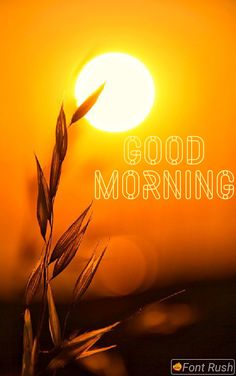 Happy Morning Images, Latest Good Morning Images, Morning Blessings, Good Morning Love, Love Images, Blessed, Neon Signs