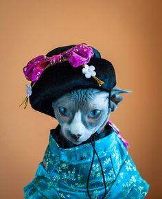 """Geisha Cat"" Photograph by Zina Zinchik #Sphynx Kitten Art"