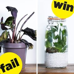 Finally There's A DIY Houseplant You Can't Kill!