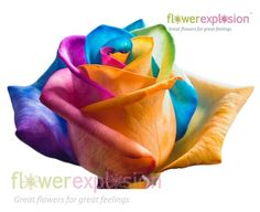 Rainbow Roses - Long-stemmed roses have their stems split and each part is put into a different dye.  The flower petals slowly absorb the colors from the dye, creating unique flowers.