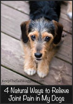 4 Natural Ways to Relieve Joint Pain in My Dogs