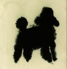best drawing of a poodle that I have EVER seen. Lourdes Sanchez