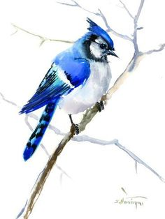 Peaceful Blue Jays Wall Art Federal Blue