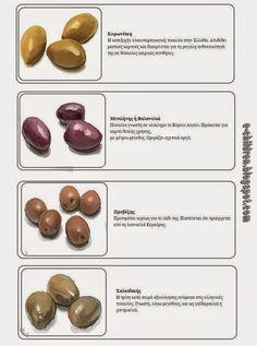 είδη ελιάς Olives, Olive Tree, Autumn, Aga, Fruit, Greek, Therapy, Teaching, Activities