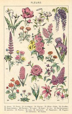 Art Du Collage, Photo Wall Collage, Picture Wall, Botanical Drawings, Botanical Art, Botanical Posters, Botanical Flowers, Poster Wall, Poster Prints