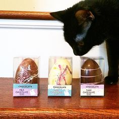 We're all pretty into the @newfoundlandchocolatecompany hollow Easter eggs.  #newfoundlandchocolatecompany #newfoundland #chocolate #newfoundland #yyt Read my blog on how to win some!  #jointhehunt #catsofinstagram