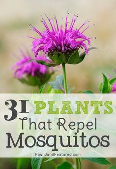 31 Mosquito Repelling Plants -- Good to know!! Yard tips for bugs and mosquitos, and how to keep them away!