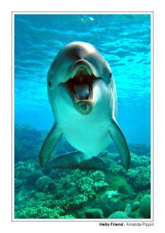 . Swim with a dolphin.