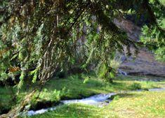 Autentic romanesc – ALISIA ENCO Magazine, Mountains, Nature, Plants, Travel, Naturaleza, Viajes, Magazines, Destinations