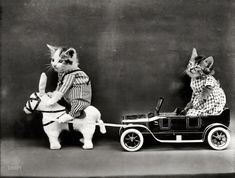 "Hybrid Power:1914. ""Kitten in costume on mule pulling kitten in toy touring car.""  Photo by Harry W. Frees."