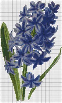 blue gyasint