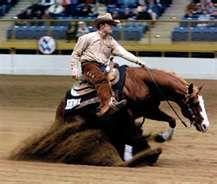reining - Horseback Riding Western