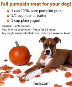 Dog pumpkin treat recipe, good for their digestive system too! Puppy Treats, Diy Dog Treats, Homemade Dog Treats, Dog Treat Recipes, Healthy Dog Treats, Dog Food Recipes, Fall Treats, Halloween Treats, Halloween Fun