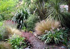 The Moosey Native Garden – NZ natives, but they look a lot like the Aust ones…… - Gartengestaltung Australian Native Garden, Australian Plants, Back Gardens, Small Gardens, Garden Shrubs, Bush Garden, Garden Plants, Garden Landscape Design, Natural Garden