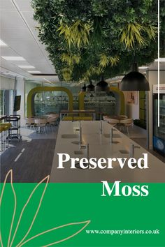 The Pre-made Flat Moss Panels are ready to use in your decor design either for your moss wall or a moss frame. They are pre-glued onto a 5mm mdf backing so can be bonded onto a surface or mechanically fixed with small screws through the front onto a hard backing or surface.They require NO Maintenance, watering or day-light, as they are made from preserved moss which is stabilized and will last at least 10 years.#mossframes #mossart #moss #mosspictureframes #mossdesigns #preserved moss Money Tree Bonsai, Board Rooms, Diy Crafts Materials, Moss Letters, Moss Decor, Ivy Wall, Washroom Design, Moss Art, Hotel Reception