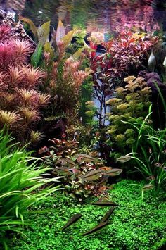 This is like the Bel Air for fish. #aquascaping #fish #aquarium
