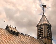 Birds on Barn Roof  Original Photograph 8x10  by TammieBowdenPhoto, $28.00
