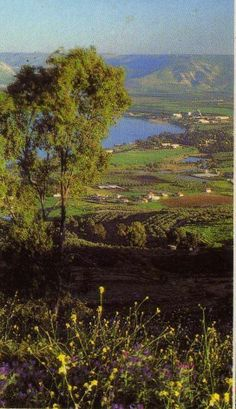 The Jordan River Valley, Israel...I actually went tubing down the Jordan. 1987