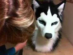 How to shave and trim faux fur Fursuit Head, Heads And Tails, Furry Art, Shaving, Faux Fur, Husky, Cosplay, Costumes, Cats