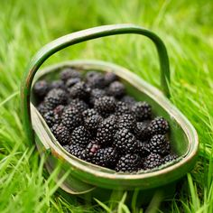 SHTF Medical Tip of the Day: Blackberry Bushes ( Have you been wasting resources by only picking berries? )