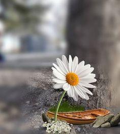 Beautiful Flowers Wallpapers, Beautiful Nature Wallpaper, Pretty Wallpapers, Beautiful Images, Flower Background Wallpaper, Flower Backgrounds, Photo Backgrounds, Cool Pictures For Wallpaper, Cute Disney Wallpaper