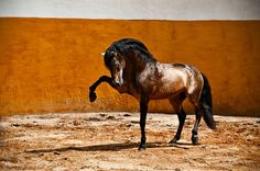www.horsealot.com, the equestrian social network for riders & horse lovers | Equestrian Photography : Melis Yalvac.