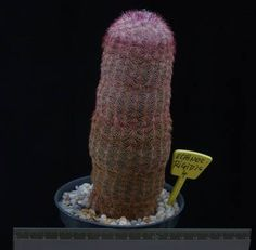 Image Digital Watch, Plant, Indoor, Accessories, Image, Digital Watch Face, Interior, Plants, Replant