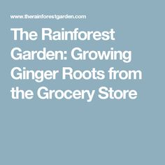 The Rainforest Garden: Growing Ginger Roots from the Grocery Store