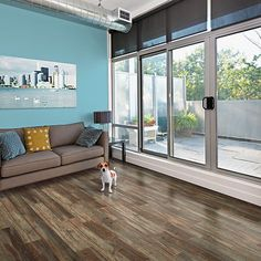 Dogs love Pergo XP Weatherdale Pine flooring too! By organizing your pet's things, you can have a pet space as clean as this!