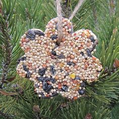 All About Birdseed, from Songbirds to Storage: Make Birdseed Ornaments