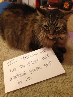 Funny Cat Shaming – Fit for Fun % Bad Cats, Funny Cats And Dogs, Silly Cats, Cats And Kittens, Baby Kittens, Cat Shaming, Funny Animal Pictures, Funny Animals, Cute Animals