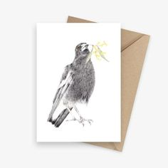 That instantly recognisable trill, distinctive black and white feathers, and worrisome inclination for swooping in spring – all Aussies know and love the magpie. With a beak full of wattle a quizzical look, this beautiful magpie is captured in all. Paper Envelopes, Kraft Envelopes, Australian Nursery, Australian Gifts, Wildlife Art, Pencil Illustration, Bird Prints, Magpie, Botanical Art