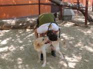 Cattery, Goats, Dubai, Check, Animals, Animaux, Animal, Animales, Goat