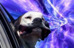 3photos: Space Doggy Style