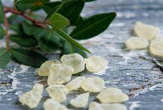 Φτιάχνουμε μαστιχόλαδο! The Kitchen Food Network, Mastic Gum, Simple Minds, Chewing Gum, Greek Recipes, Sugar And Spice, Food Network Recipes, Natural Remedies, Plant Leaves