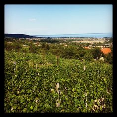 view at Csopak Filmmaking, Vineyard, Graphic Design, Mountains, Architecture, Drawings, Summer, Photography, Painting