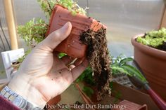 Puttering and potting up | Red Dirt Ramblings®
