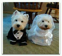 Westie wedding!  :)