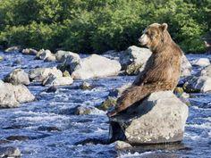 river bear - Google Search