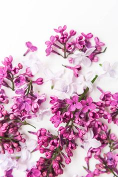 blossoming purple spring lilac flowers on white background flat lay