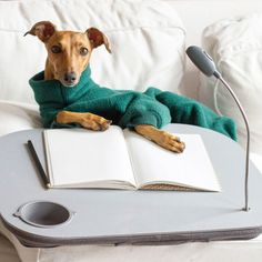 When writing the story of your life, don't let someone else hold the pen - #HarleyDavidson   http://www.iggyjoey.com    #iggyjoey #italiangreyhounds Italian Greyhound Greyhounds