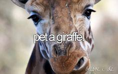 Pet a giraffe