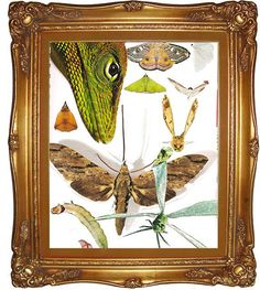 Specimens Collage  Upcycled Eco Art  Mixed Media Print by dproject
